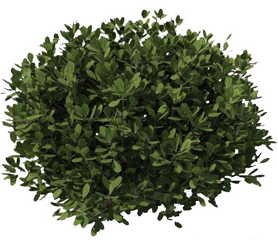 jpg freeuse download Vector bushes shrubbery. Png image entourage vegetation