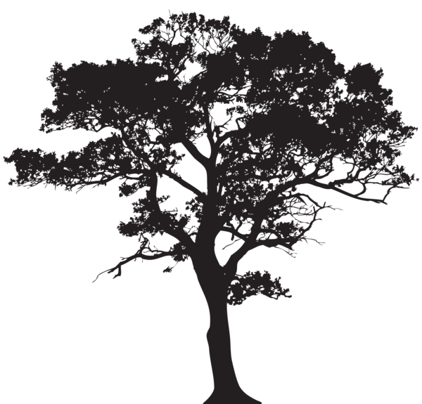 transparent stock Silhouette Tree PNG Clip Art Image