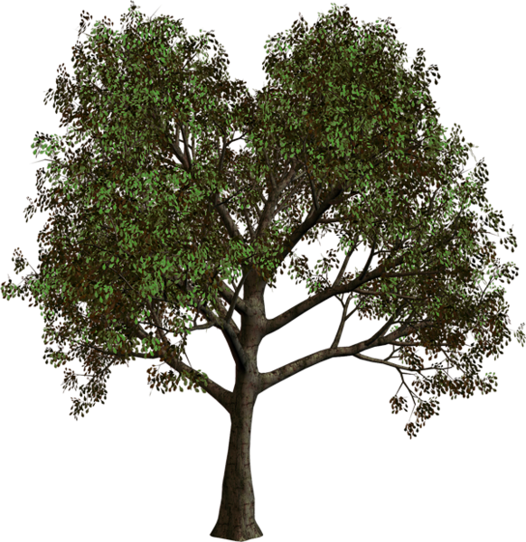 clip library library Tree png art pinterest. Bushes clipart forest.