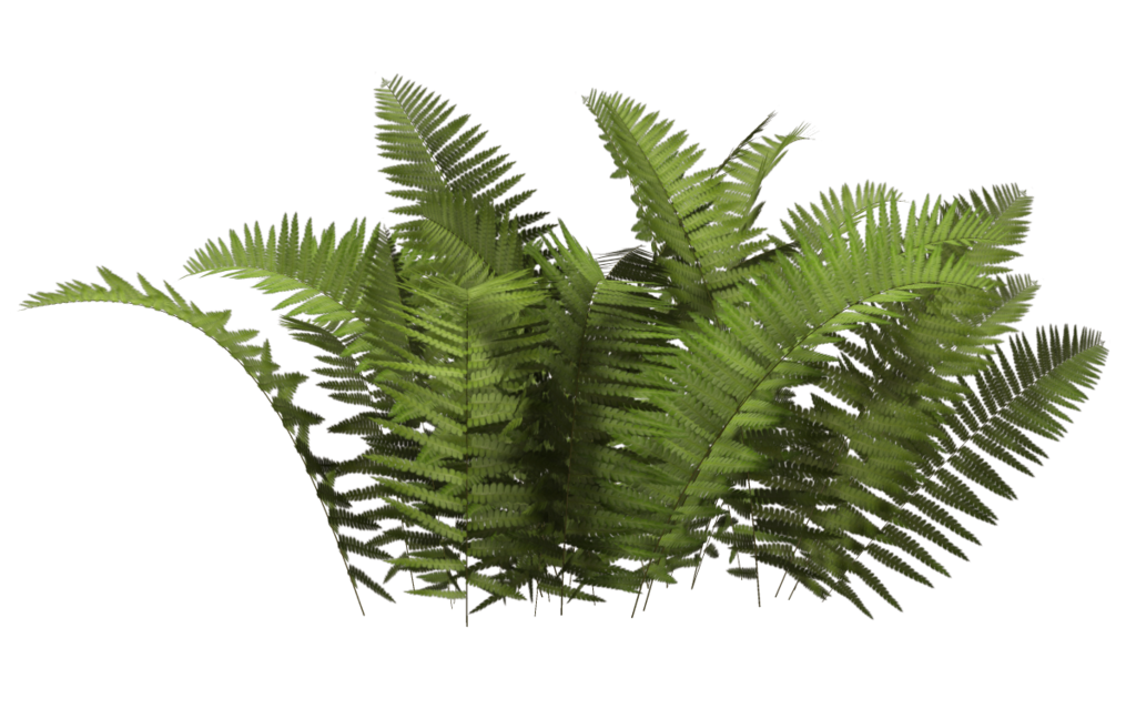 graphic black and white download Fern clipart prehistoric plant. Bushes png images free