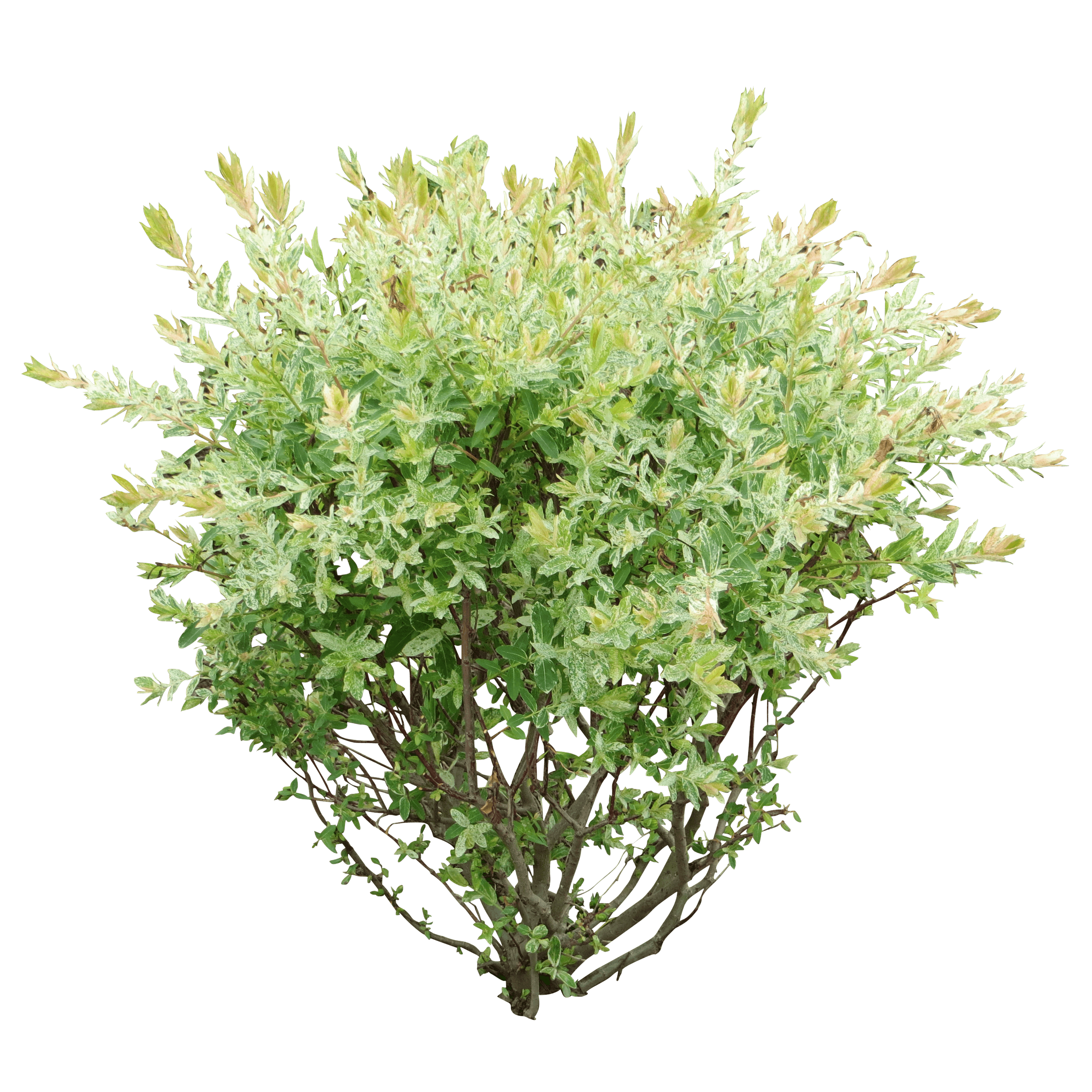 svg Bushes clipart lot flower. Image result for bush