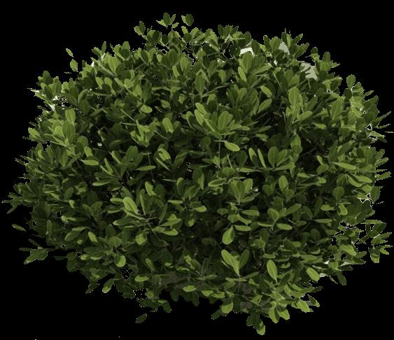 transparent Bushes transparent. Green bush png stickpng