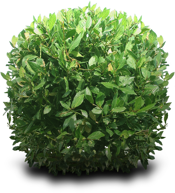 graphic library download Shrub png images all. Bushes transparent