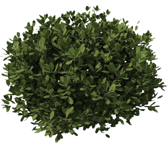 clipart royalty free download Bushes transparent. Png images free download