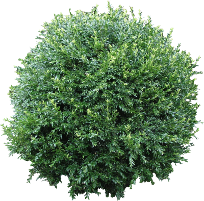 clipart free library Download free png image. Bushes transparent