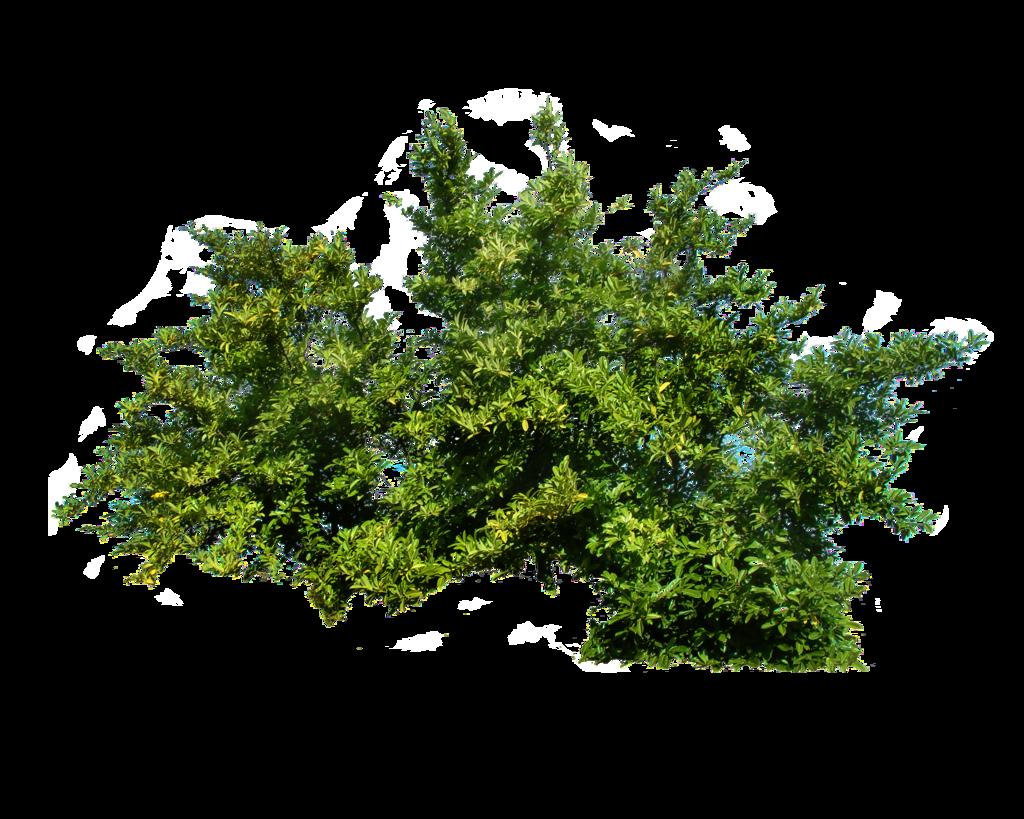 graphic royalty free Shrub tree plants png. Bushes transparent
