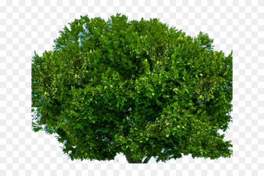 jpg freeuse Bushes transparent. Clipart tree top bush