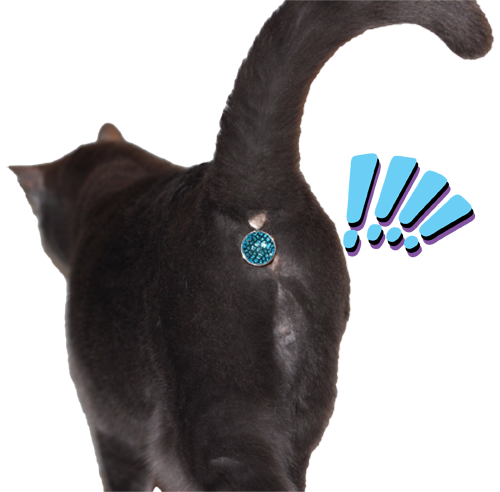 clip art freeuse stock Cover Your Cat