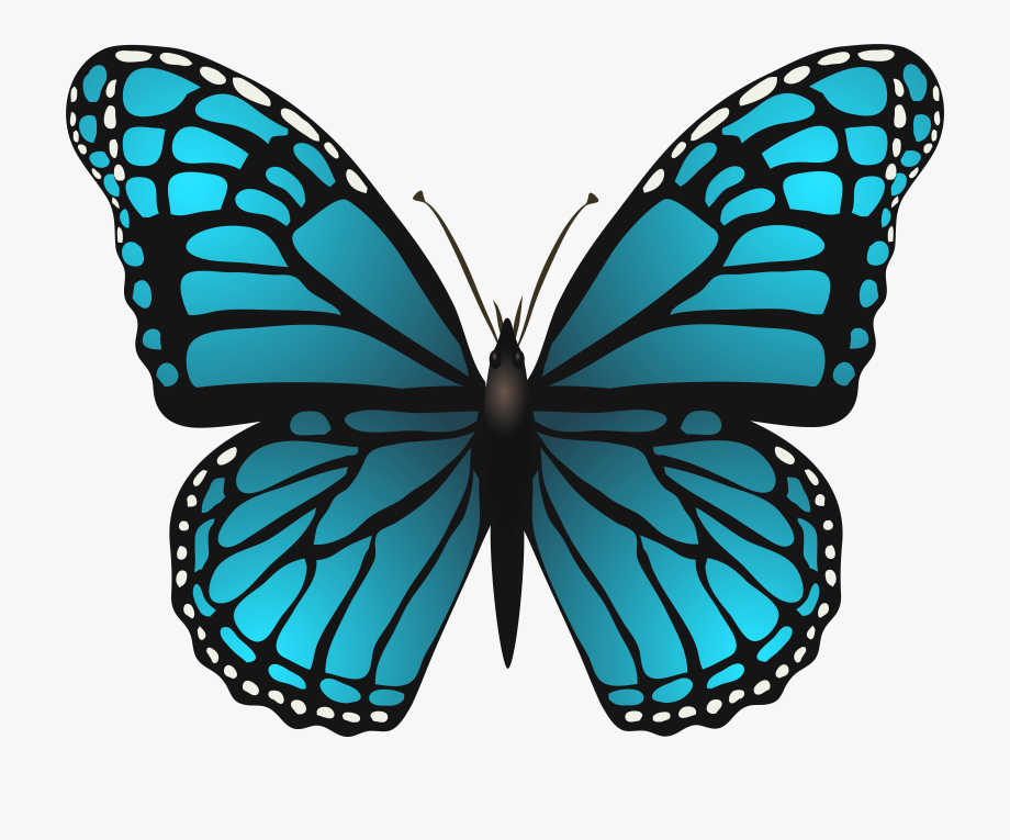 graphic transparent library Butterflies clipart. Png transparent blue butterfly.