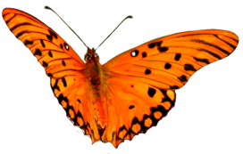 png free library Animal clip art flying. Butterfly clipart orange.