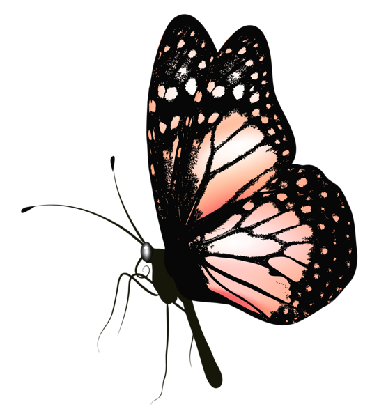 png freeuse Moth clipart realistic. Butterfly clip art puzzle.