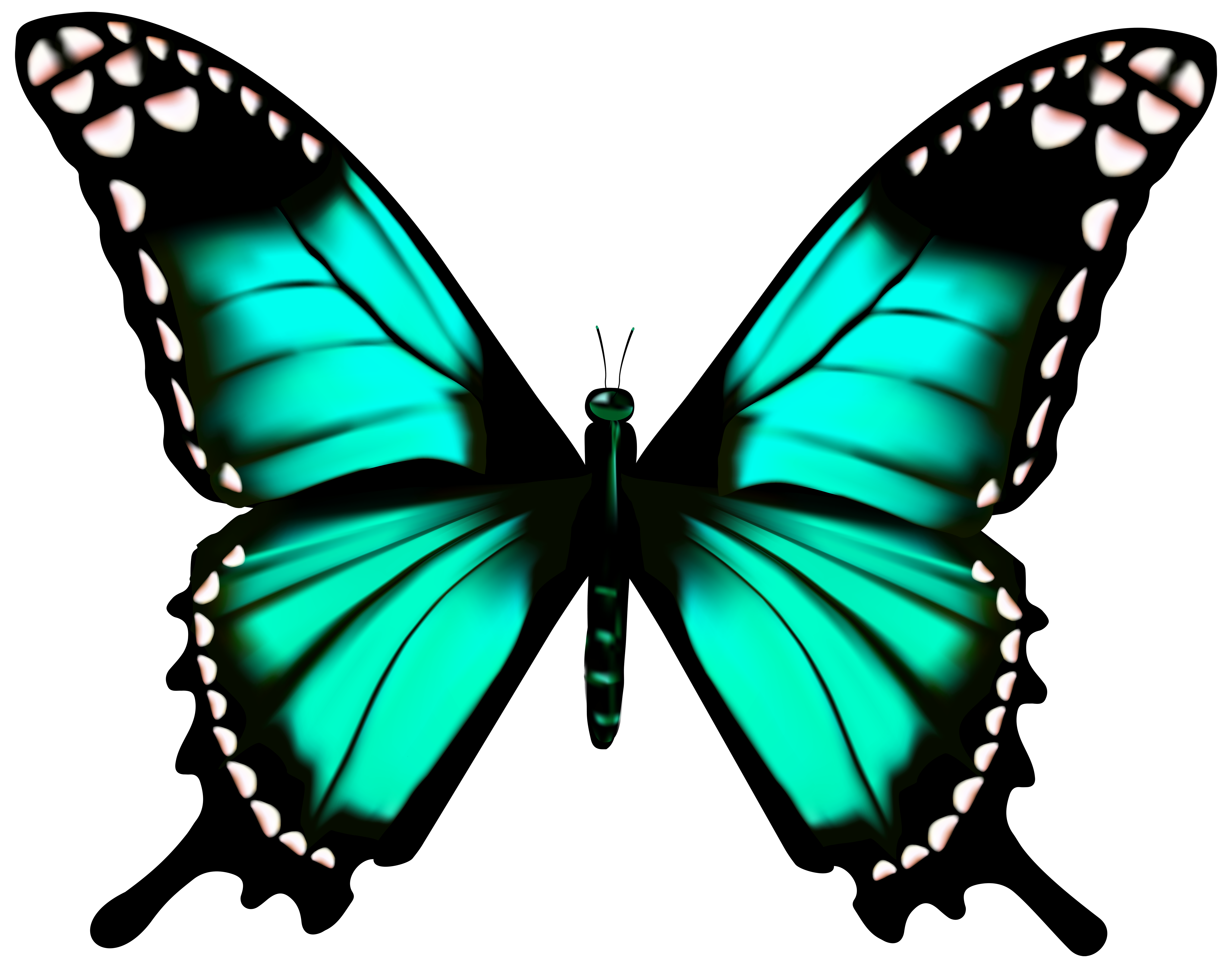 black and white download Butterfly transparent png clip. Moth clipart realistic.