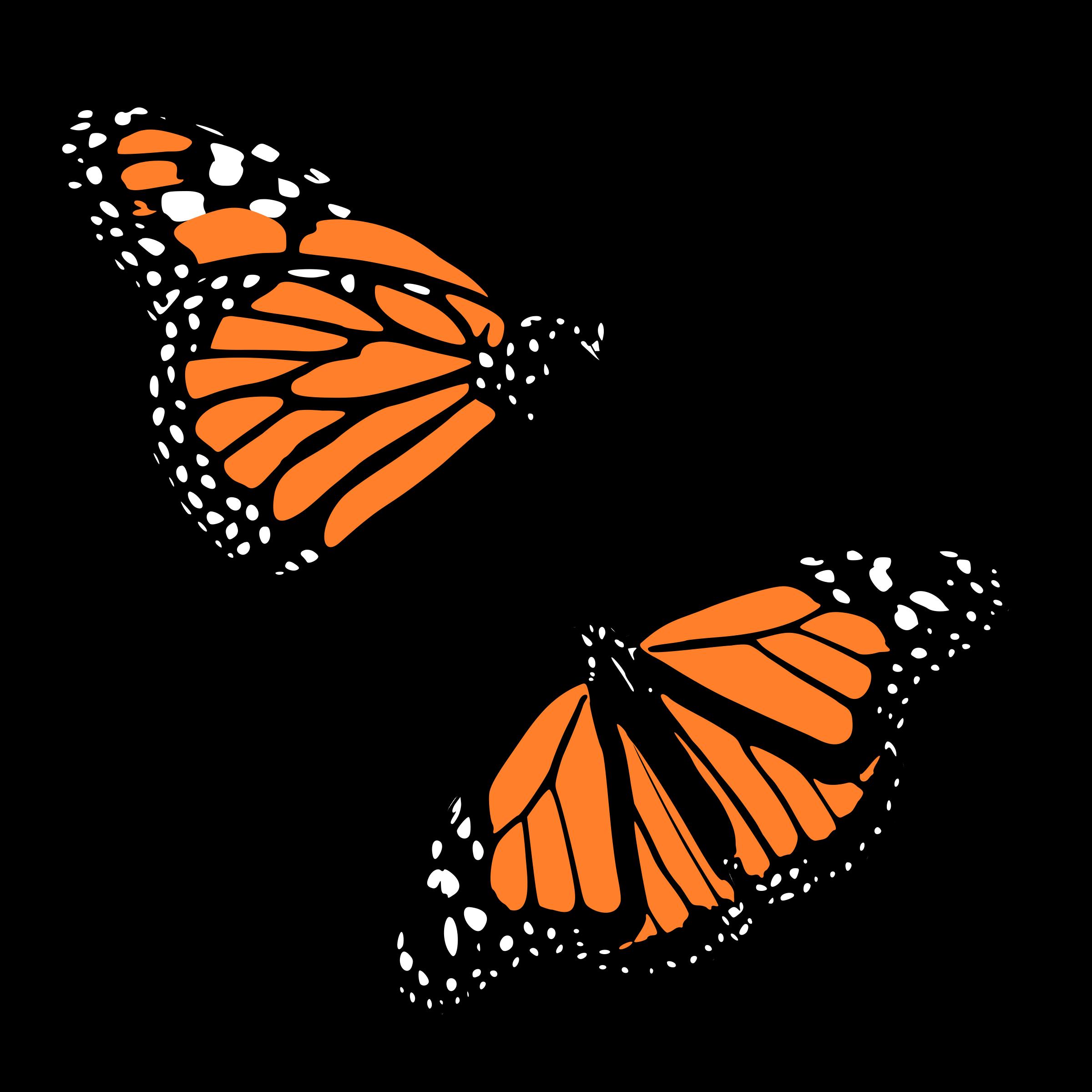 clip art library Line butterfly free on. Butterflies clipart swirl.