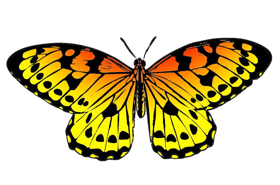 clip black and white library Black and orange drawing. Butterfly clipart