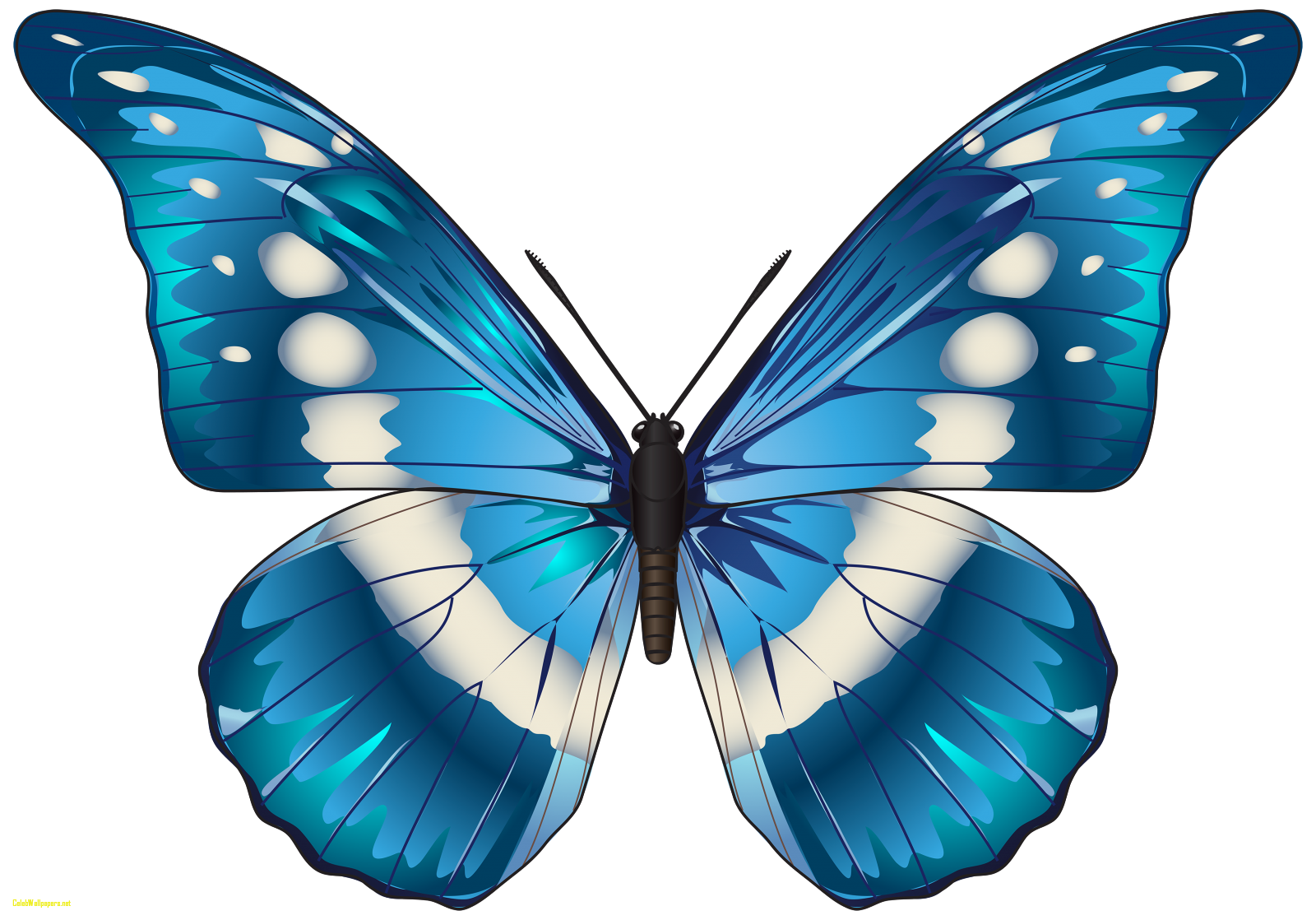 vector transparent library Blue clipartxtras celebswallpaper. Butterfly clipart.