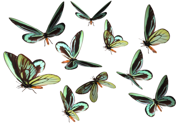 vector library stock Butterfly clipart bunch. Animal stocks favourites by.
