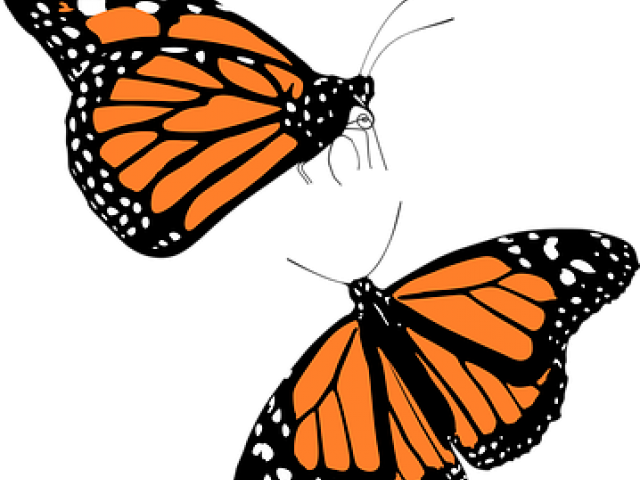 clip art stock Monarch free on dumielauxepices. Butterfly clipart bunch.