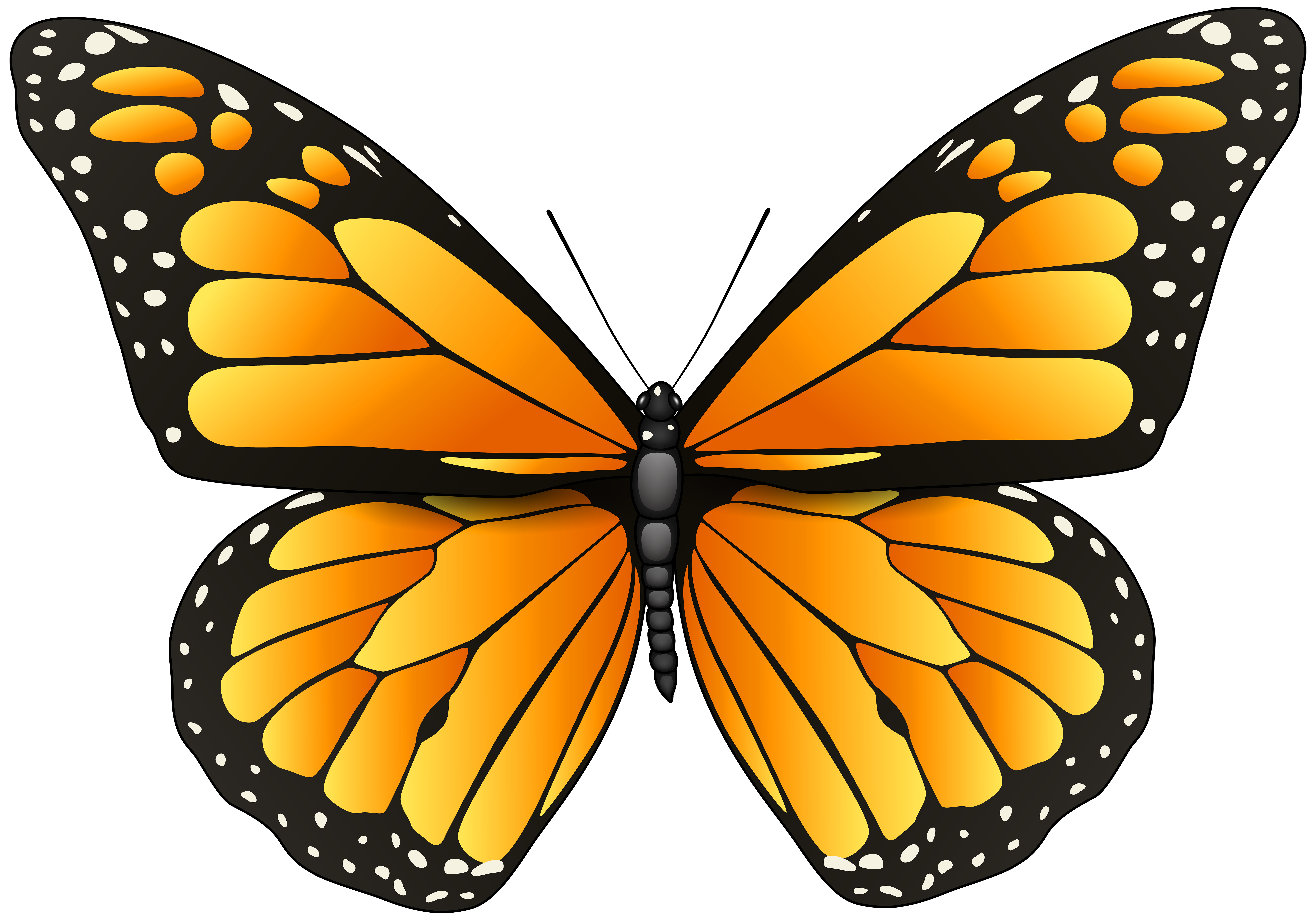 clip library stock Png clip art best. Butterfly clipart orange.