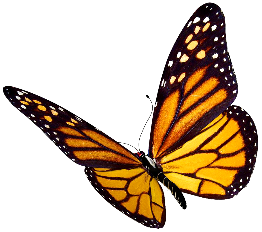 royalty free Risultati immagini per flying. Butterfly clipart translucent.
