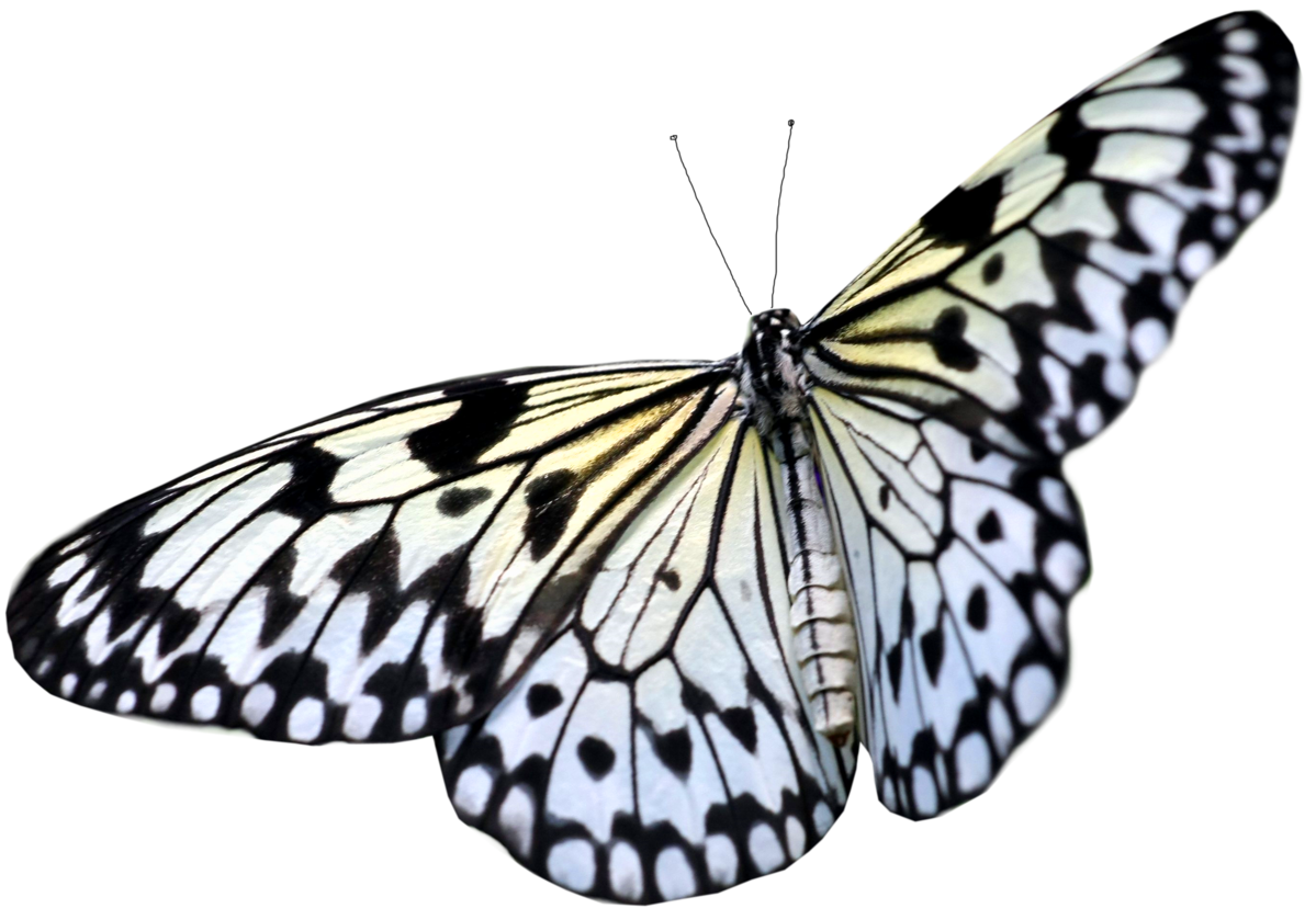 picture freeuse library Png image free picture. Butterfly clipart translucent.