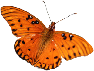 png transparent library Butterfly clipart translucent. Playpen of graphics cubit.