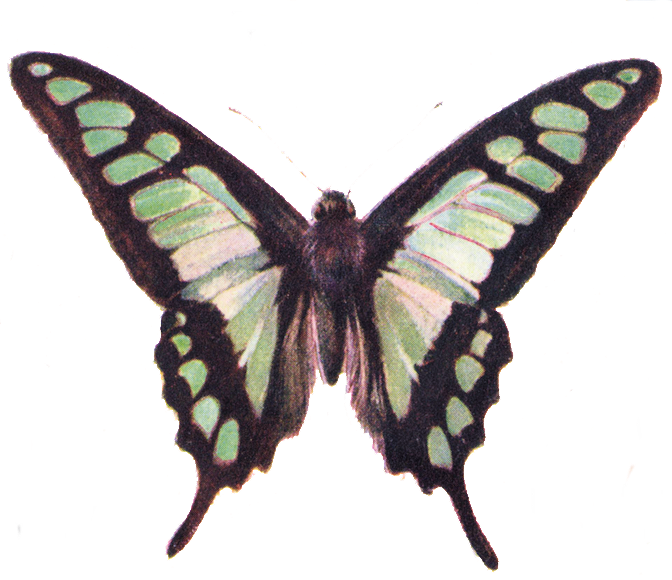 banner library download Free clip art beautiful. Moth clipart vintage butterfly.