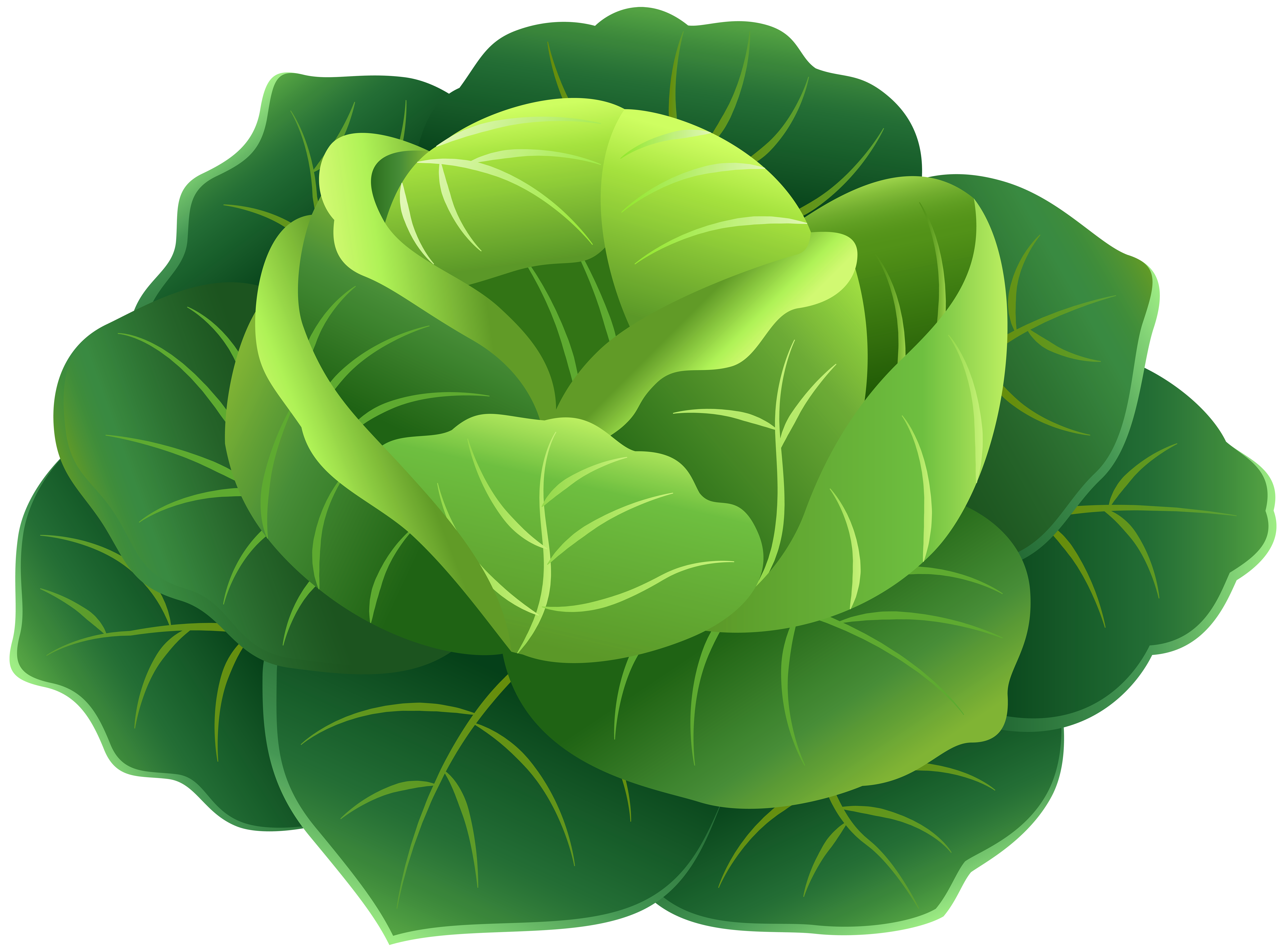 png transparent library Png clip art image. Cabbage clipart.