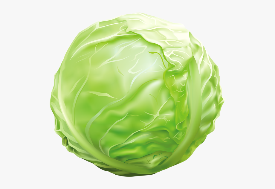 jpg library stock Cabbage clipart. Png image graphics pinterest