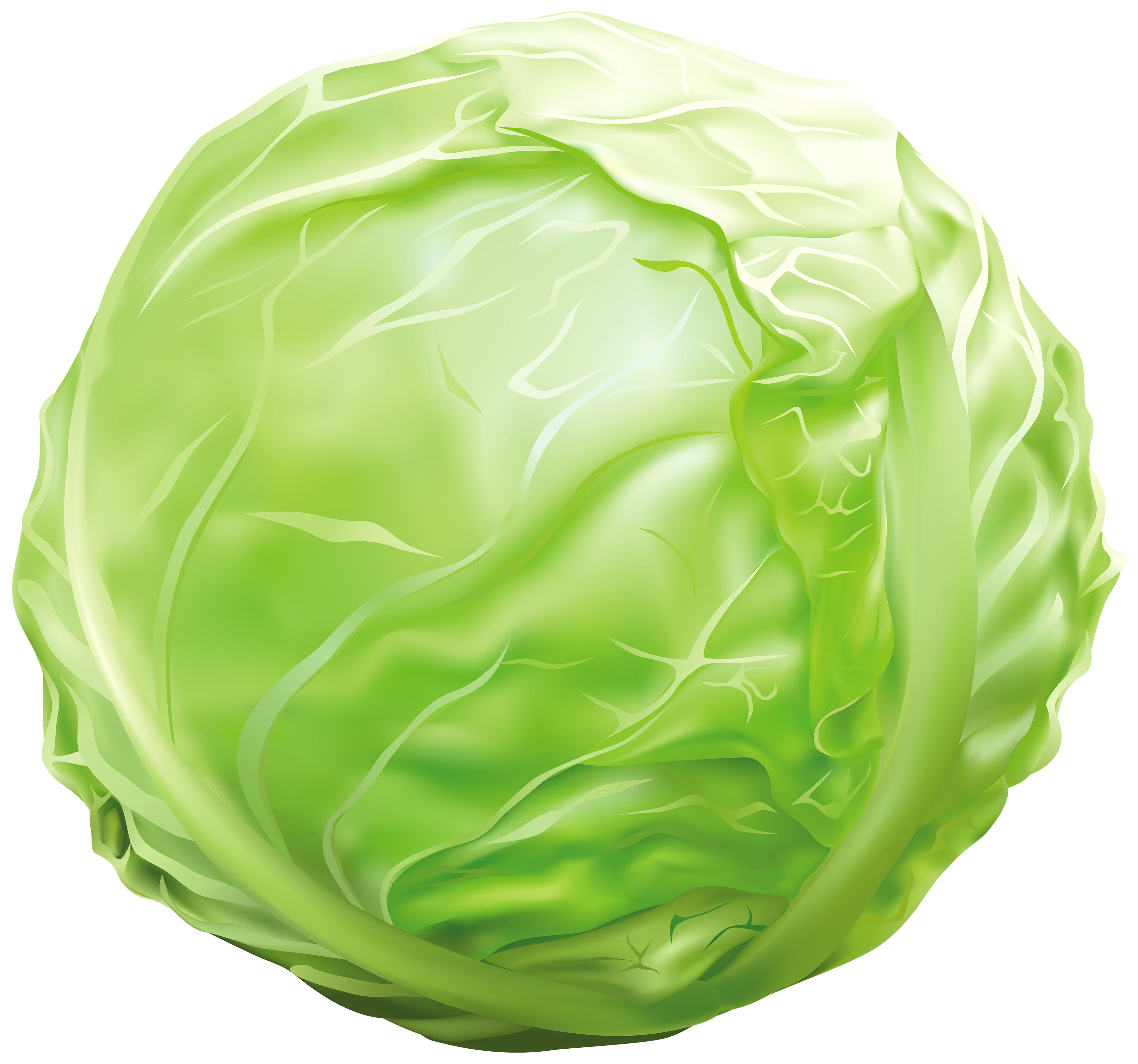 clip art free Cabbage clipart. Png image gallery yopriceville.