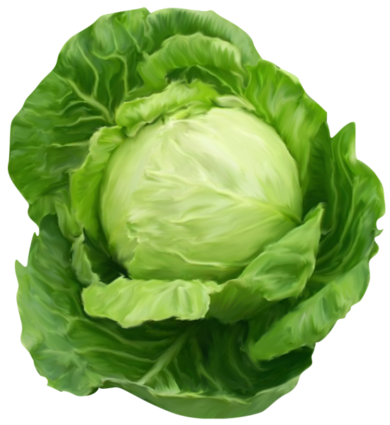 banner royalty free Cabbage clipart. K poszta p pinterest