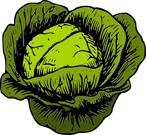 picture royalty free library Collection of free cabbaging. Cabbage clipart animated.