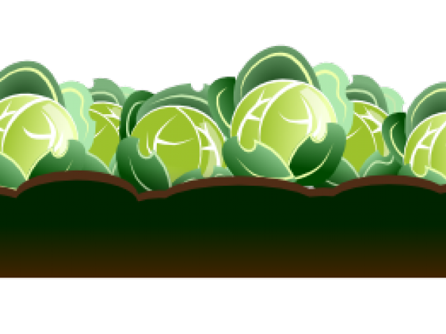 picture library Cabbage clipart animated. Cartoon free on dumielauxepices.