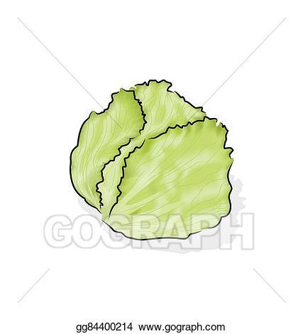 jpg free library Cabbage clipart iceberg lettuce. .