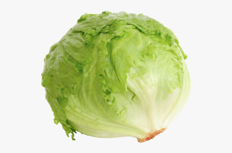 clip art black and white stock Clip art freeuse download. Cabbage clipart iceberg lettuce.