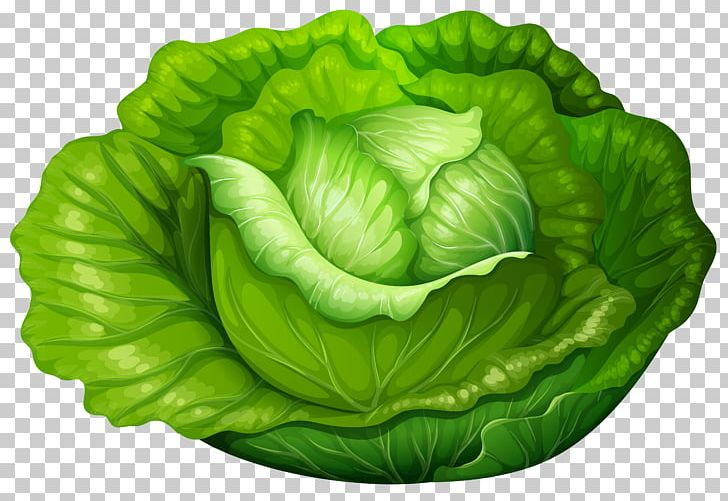 png black and white library Cabbage clipart iceberg lettuce. Vegetable png .