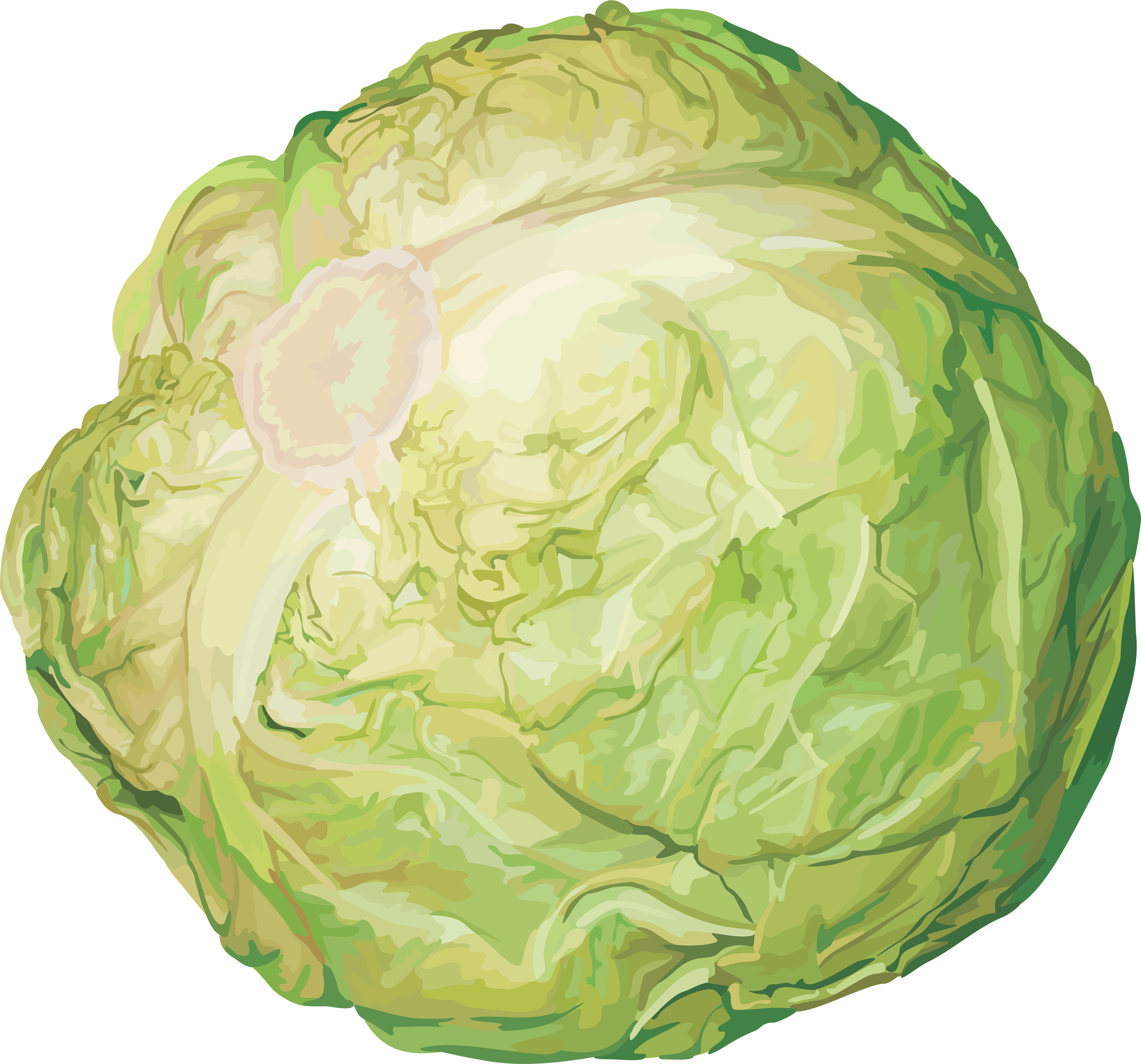png library stock Png image free download. Cabbage clipart iceberg lettuce.