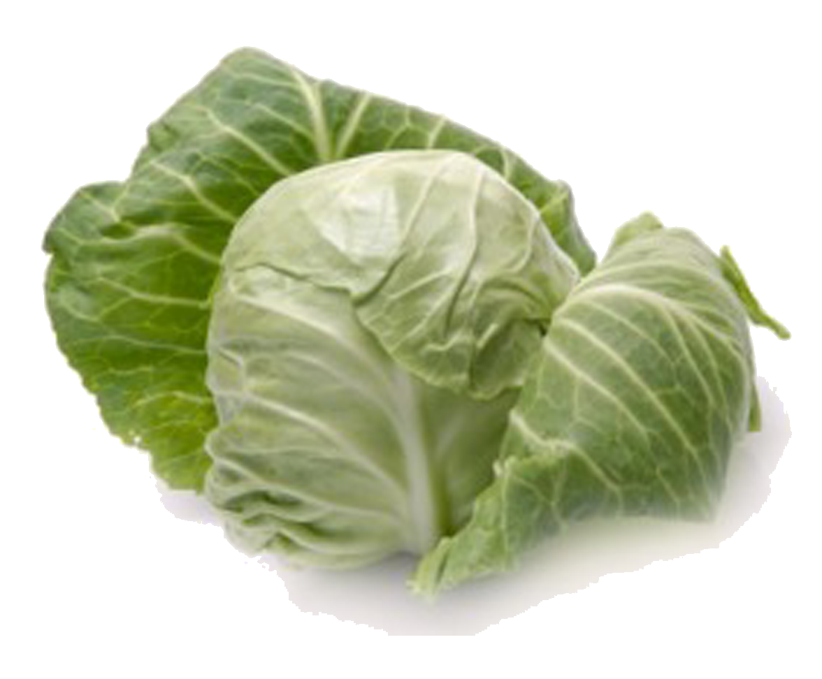 picture free library Cabbage clipart iceberg lettuce. Png transparent images pluspng.
