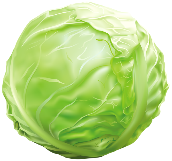 picture royalty free download Cabbage PNG Clipart Image
