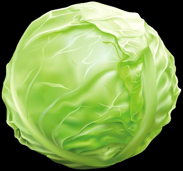 freeuse Cabbage png image graphics. Lettuce clipart vintage.