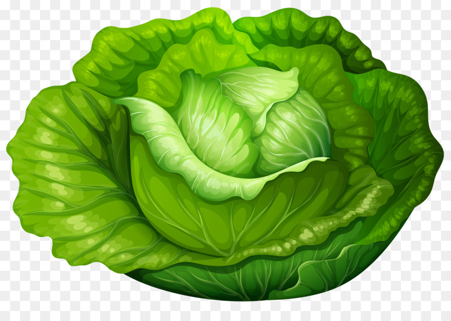 banner free library Cabbage clipart letus. Spring background lettuce food.