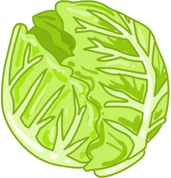 png free download Cabbage clipart letus. Free cliparts download clip.