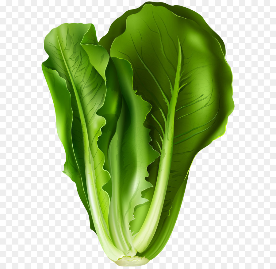 vector library download Lettuce leaf . Cabbage clipart letus.