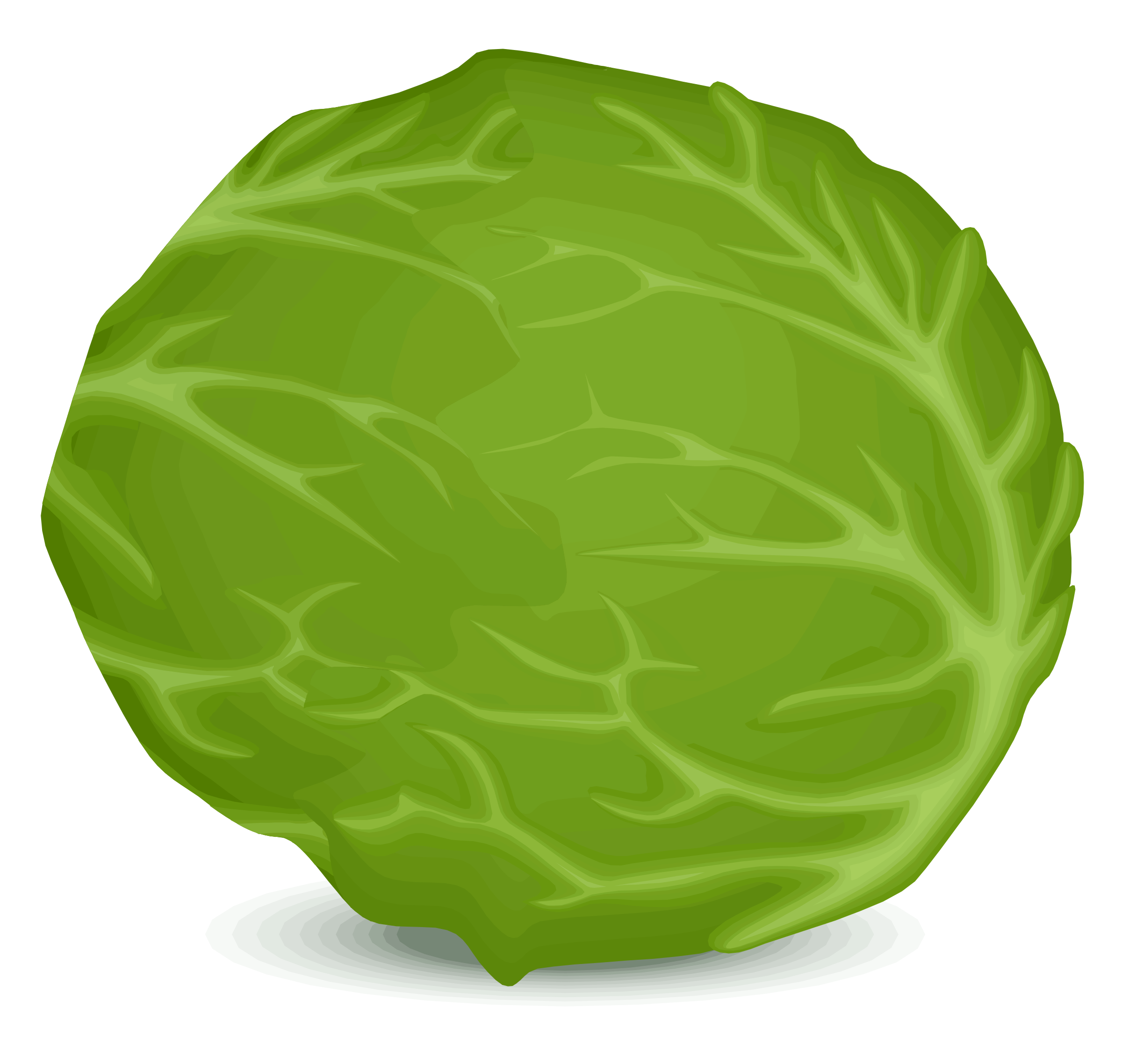 png transparent stock Collection of free cabbaging. Cabbage clipart letus.