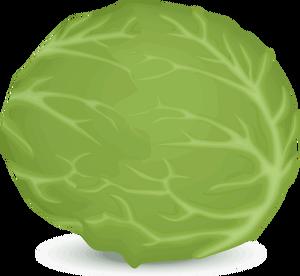 clip art transparent Cabbage clipart letus. Lettuce face free on.
