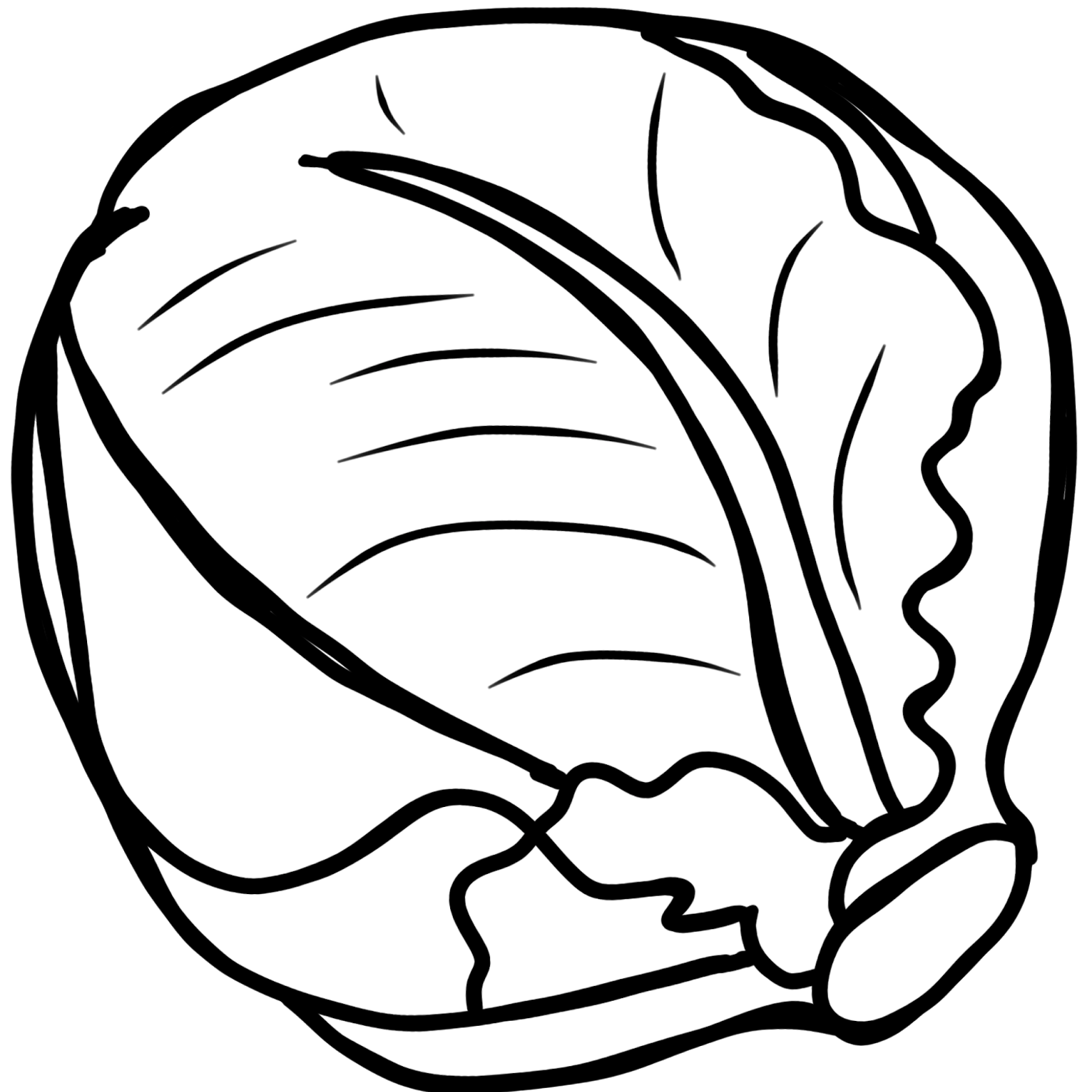 picture royalty free library Cabbage Drawing at GetDrawings