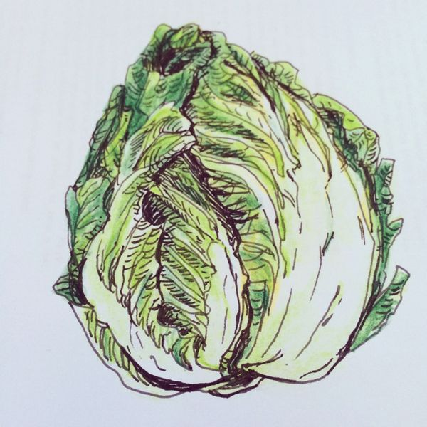 picture free stock Pin on Cabbage Mania