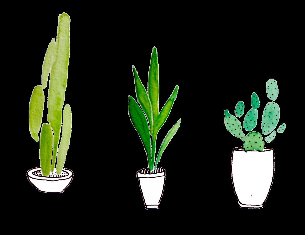 vector free download Plant drawing at getdrawings. Cactus clipart cholla.