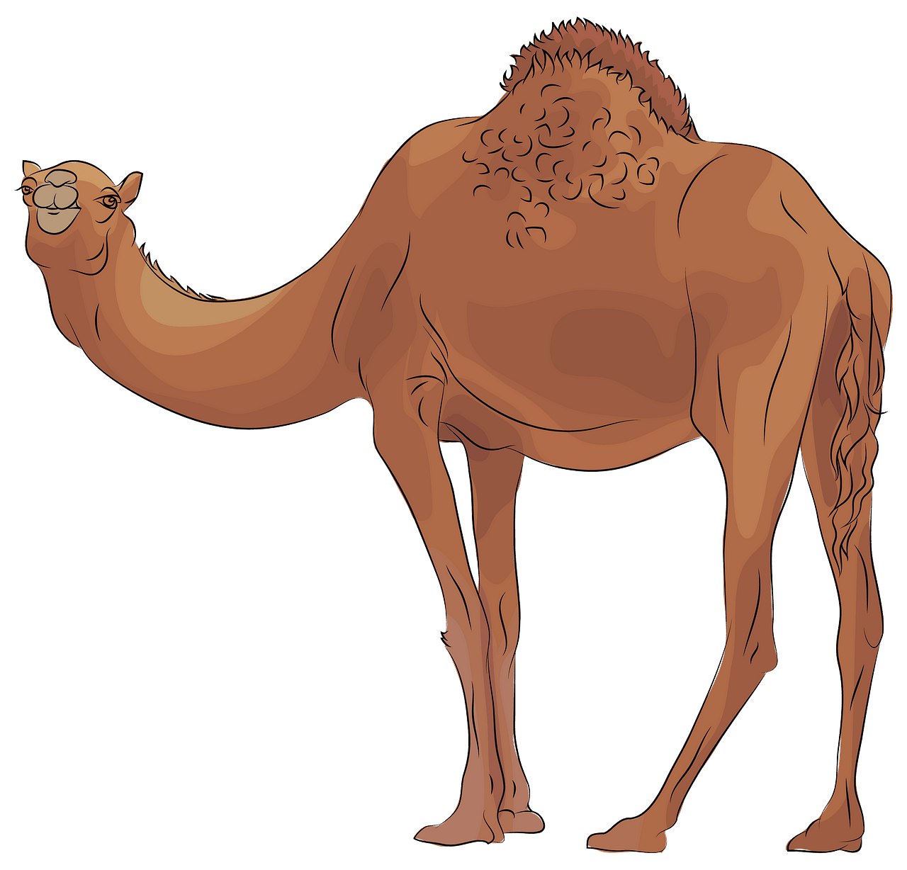 png library Camel clipart. Free download creazilla .