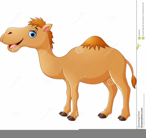 transparent stock Funny free images at. Camel clipart.