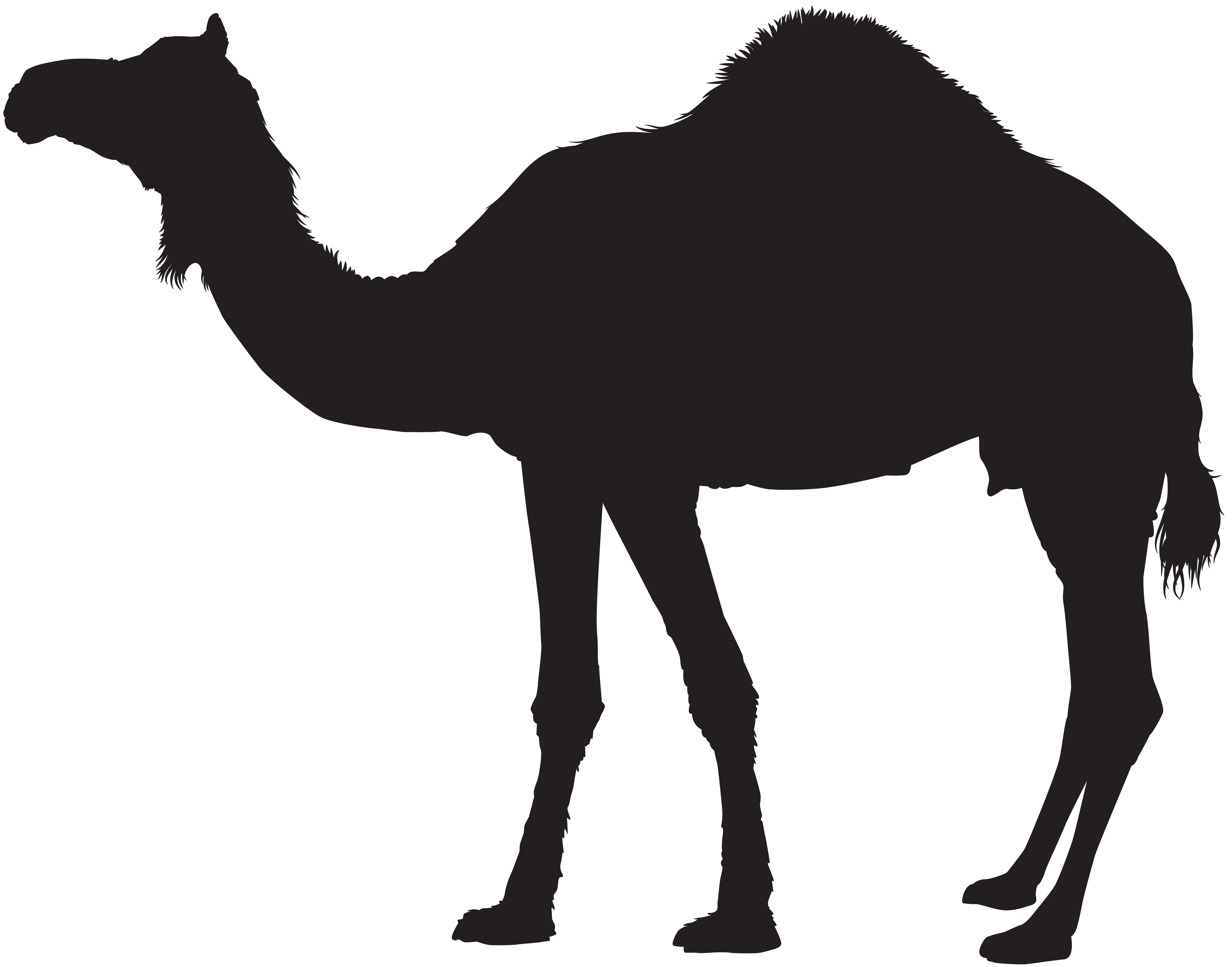 png Silhouette images at getdrawings. Camel clipart camel shadow.